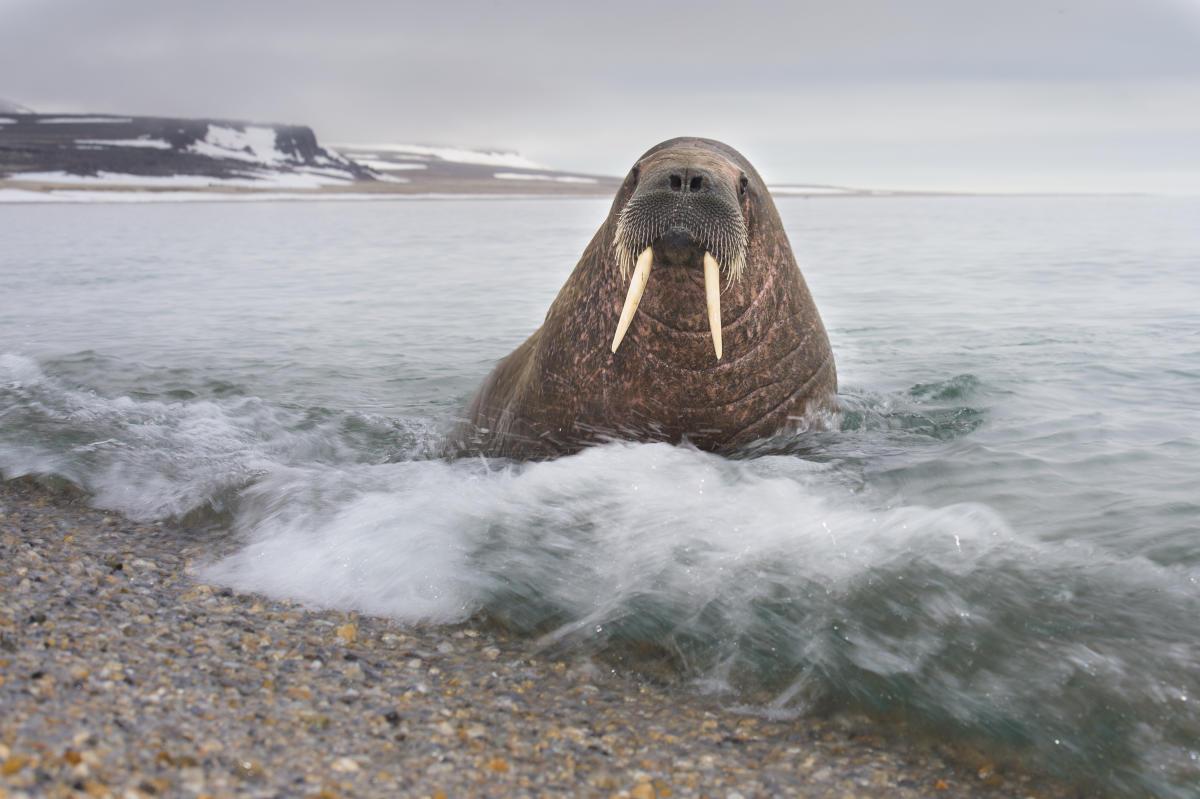 The Arctic Svalbard Archipelago